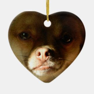 Heart Ornament with a Chihuahua Pomeranian mix