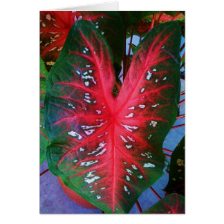 Heart Plant Greeting Card