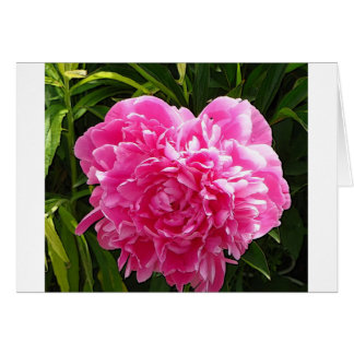 Heart Shaped Peony Card