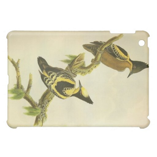 Heart Spotted Woodpecker iPad Cases
