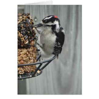 Heart Wings, Woodpecker Card