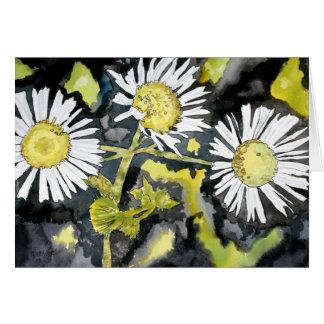 heath aster wildflower greeting card