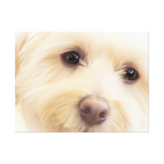 Heavenly Pup Canvas Print