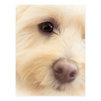 Heavenly Pup Postcard