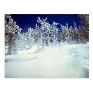 Heavenly Valley, U.S.A. Postcard