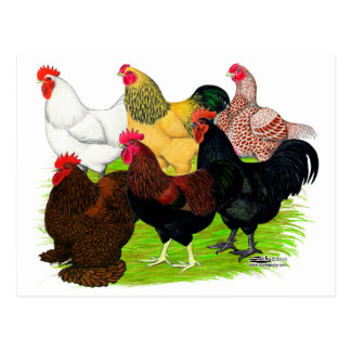 Heavy Rooster Assortment Postcard