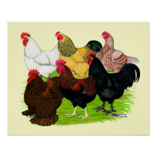 Heavy Rooster Assortment Poster