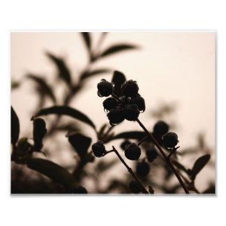 hedge berries in the rain monochrome color photo