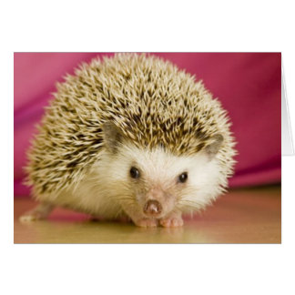 hedge hog-all occasion card