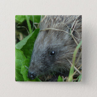 Hedgehog #1 2 inch square button