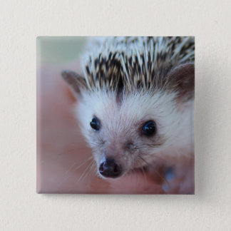 hedgehog 2 inch square button