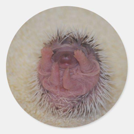 Hedgehog Baby Hands Up Round Sticker