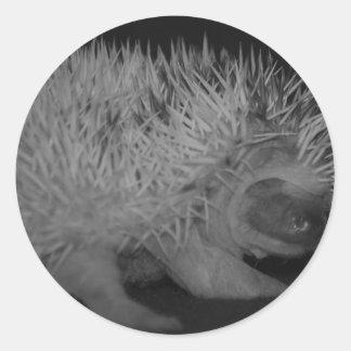 Hedgehog Baby in Black and White Round Sticker