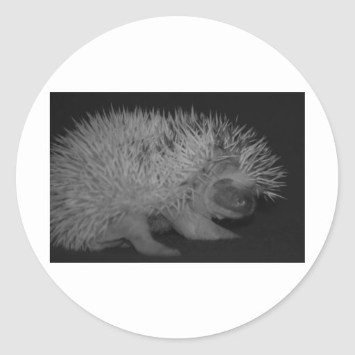Hedgehog Baby in Black and White Stickers