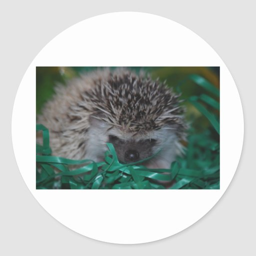 Hedgehog Baby in Easter Grass Stickers