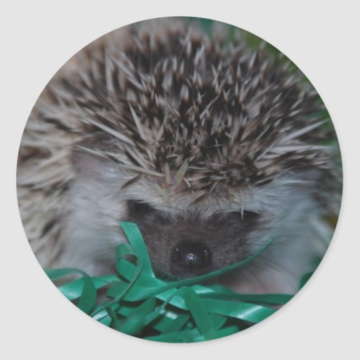 Hedgehog Baby in Easter Grass Round Stickers