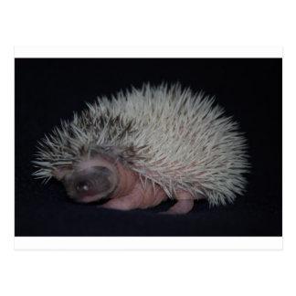 Hedgehog Baby Postcard