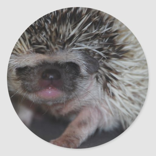 Hedgehog Baby Stickers