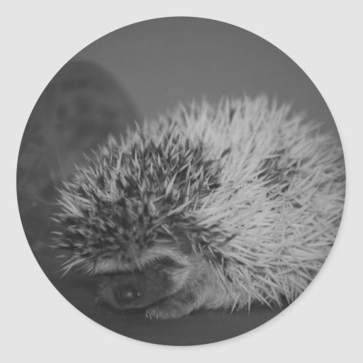 Hedgehog Baby with Easter Egg in Black and White Round Stickers