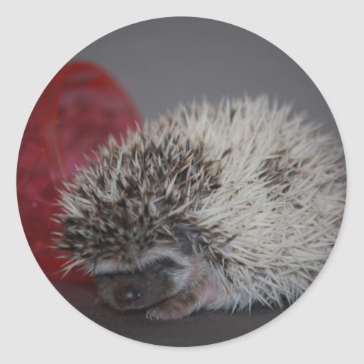 Hedgehog Baby with Easter Egg Round Stickers