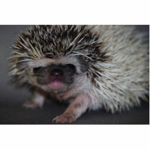 Hedgehog Cutout Photo Sculptures