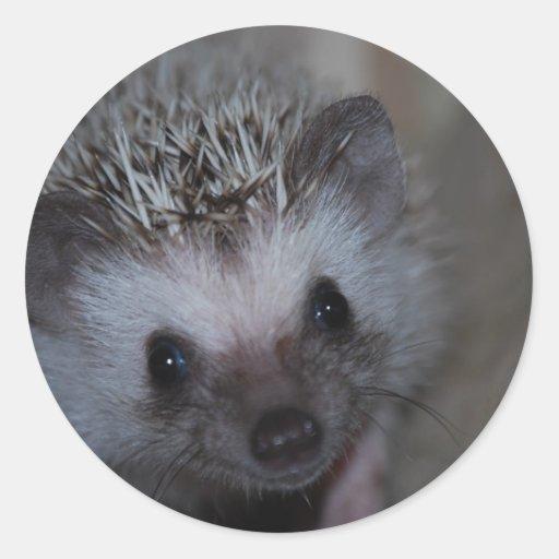 Hedgehog Face Sticker