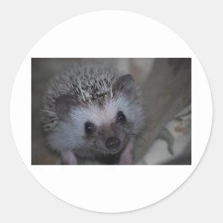 Hedgehog Face Round Sticker