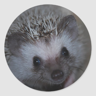 Hedgehog Face Stickers