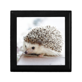 Hedgehog Gift Box
