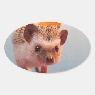 Hedgehog Happiness Oval Sticker