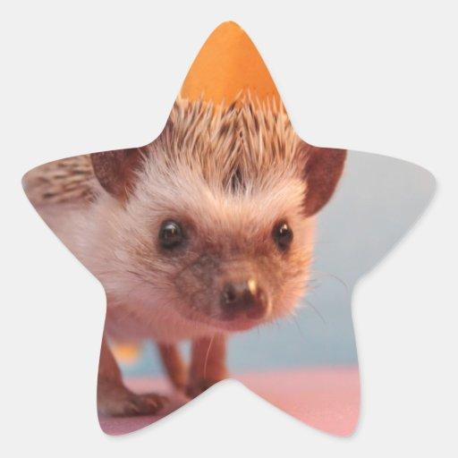 Hedgehog Happiness Star Sticker
