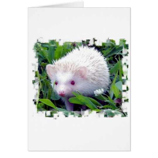 Hedgehog in the Grass Card