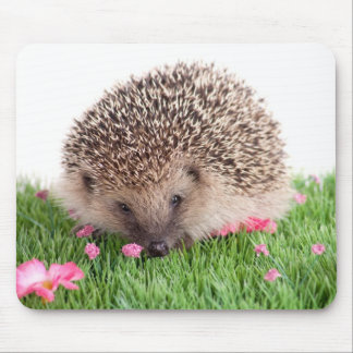 hedgehog, mouse pad