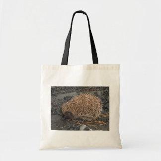 Hedgehog On Tiny Black Rocks
