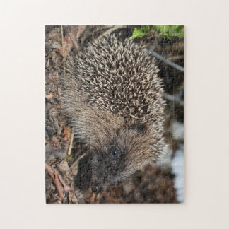 Hedgehog Photo Puzzle