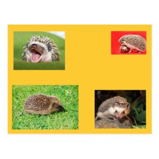 Hedgehog post card! very cute! postcard