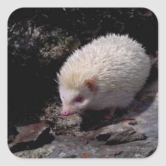 Hedgehog taking a stroll square sticker