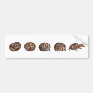Hedgehogs in a line bumper sticker