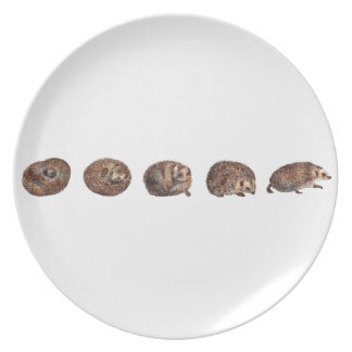 Hedgehogs in a line plate