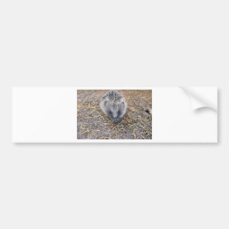 Hedgie Products Bumper Sticker