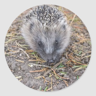 Hedgie Products Classic Round Sticker