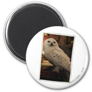 Hedwig 3 fridge magnet