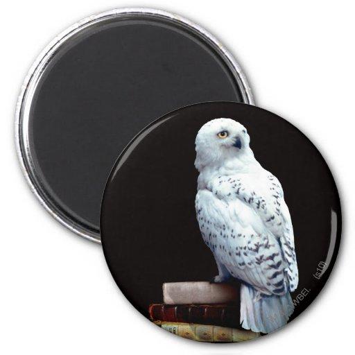 Hedwig on books refrigerator magnet
