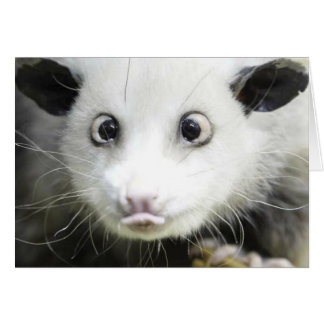 Heidi The Cross Eyed Opossum Card