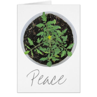 Heirloom Tomato Plant Peace Sign Greeting Cards