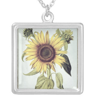 Helianthus Annuus from 'Velins du Roi Vol.36' Silver Plated Necklace