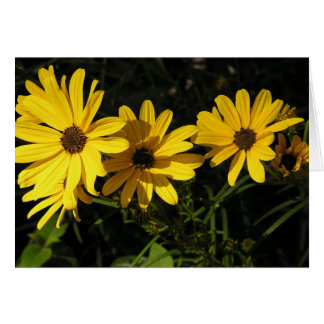 Helianthus salicifolius (Willow-leaved sunflower) Card