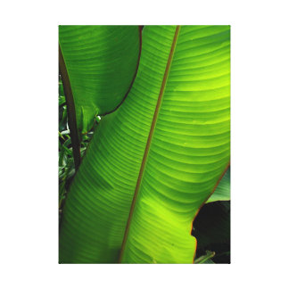 Heliconia Leaves Canvas Print