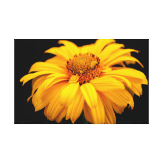 Heliopsis  'Goldgefieder/Golden Plume' Canvas Print