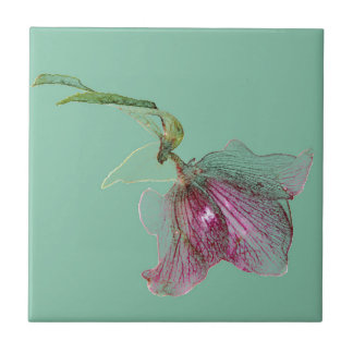Hellebore flower on mint green turquoise ceramic tile